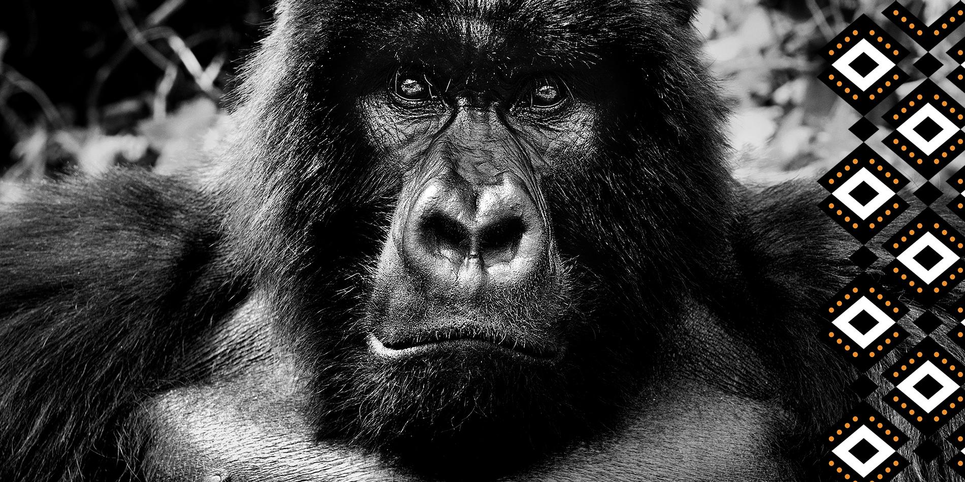 TCA20 Gorilla